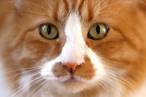 Psychology behind cat behavior