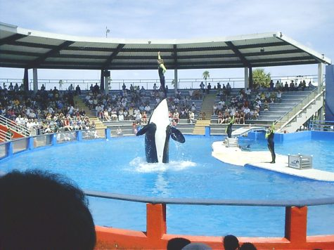 Free the orcas