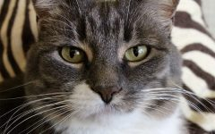 10 reasons cats are cooler than dogs