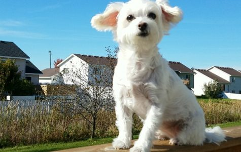 Pets of Sartell