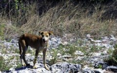 Feral dogs kill six children in India