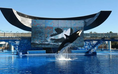Facing the facts of Sea World: abusement parks