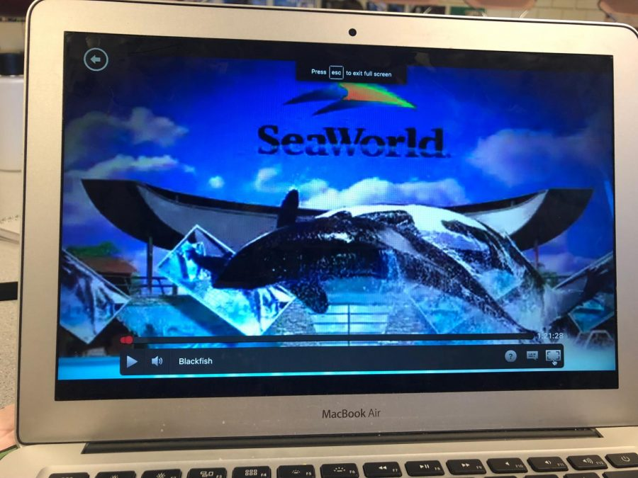 Famous Blackfish documentary that educated the public on the harm caused by keeping orcas captive.
