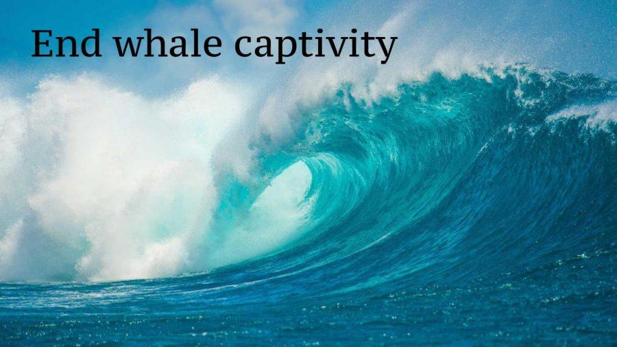 Help put an end to killer whale captivity.