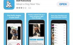 Tinder-like apps for rescue dogs make adopting a new best friend easier than ever