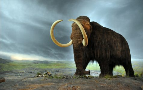 Parts of woolly mammoth cells show biological signs of life