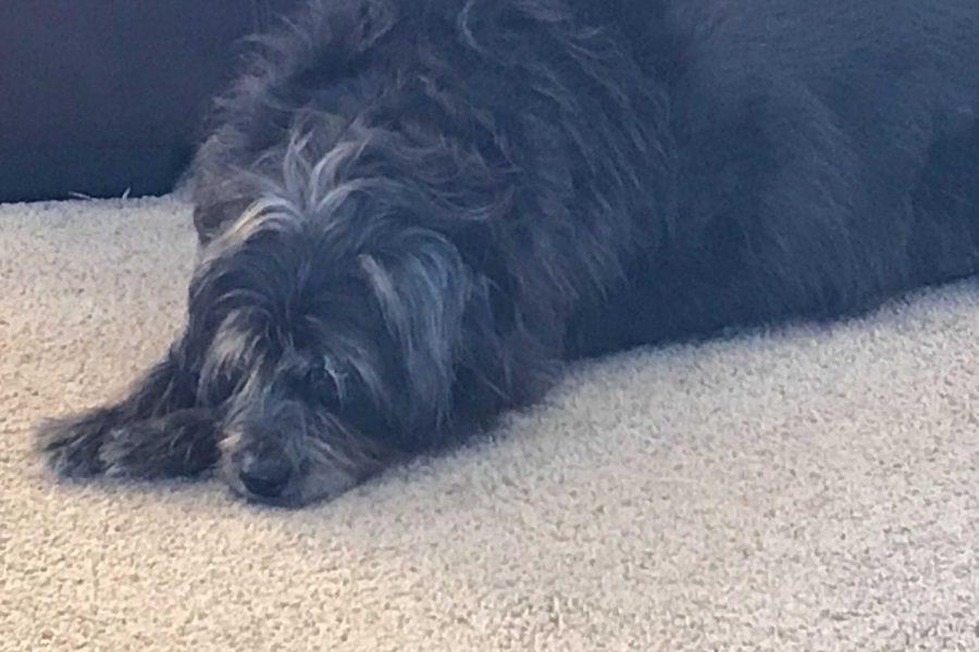 Original photo of Ernie the sleeping dog