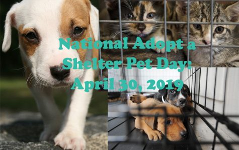 National Adopt-a-Shelter pet day