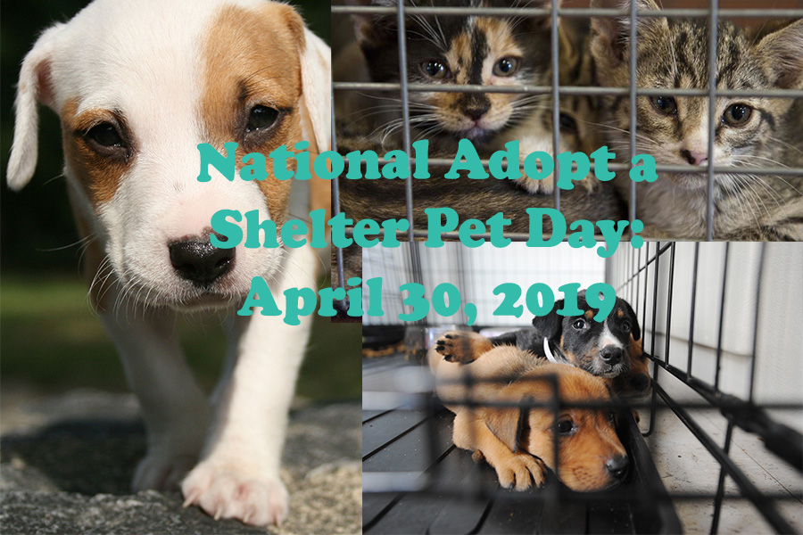 National Adopt a Shelter Pet Day is coming up on Tuesday, April 30.