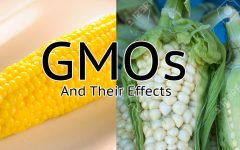 GMOs: Good or Bad?