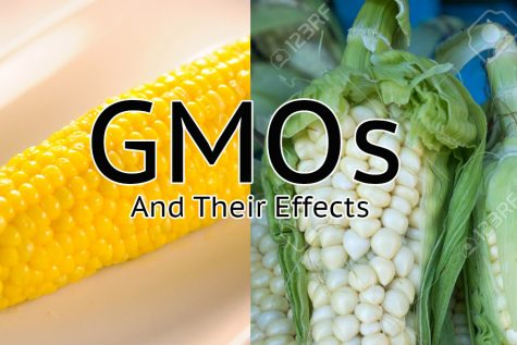 GMOs get a bad rap but they aren