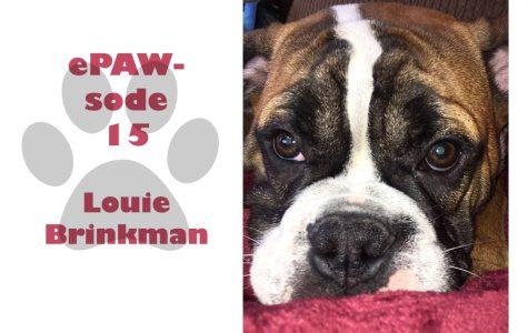 Louie Brinkman is a one year old Old English Bulldog.