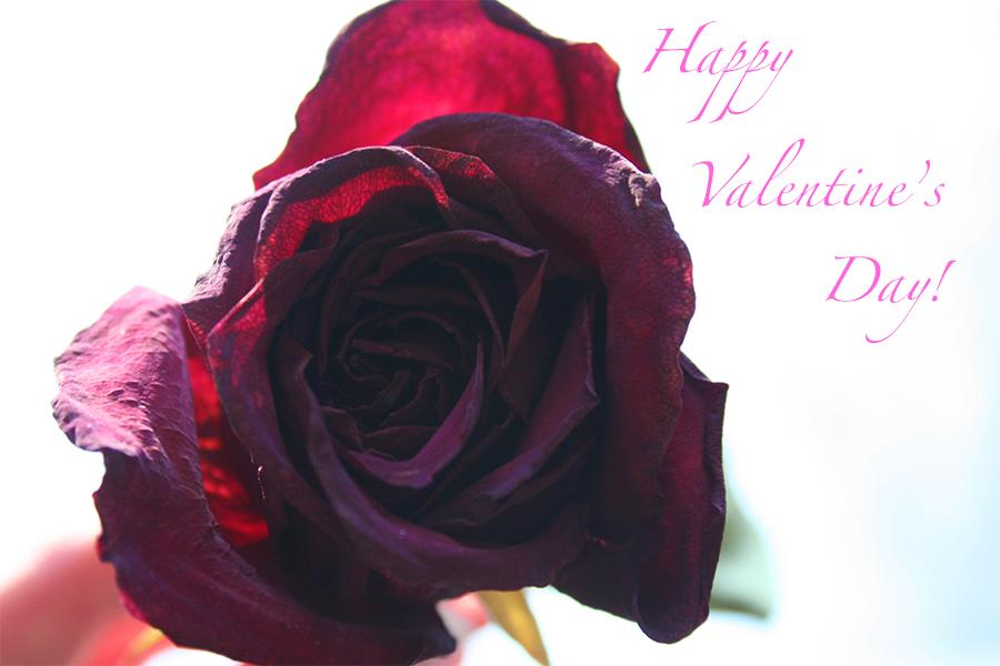 Everyone+loves+roses%21