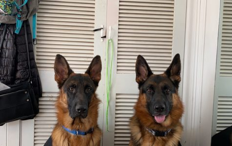 These are two of my dogs. Imagine that one of them is the dog in my short story.