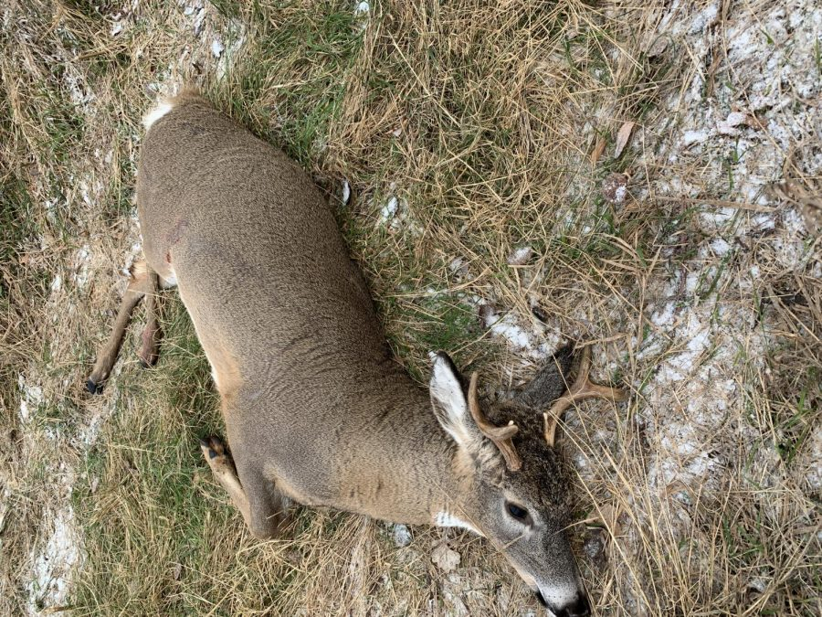 cousins 6pt from 2019 gun season
