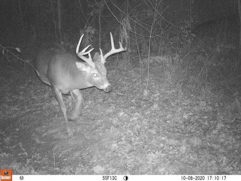Big 8 point buck on a Bushnell trail camera.