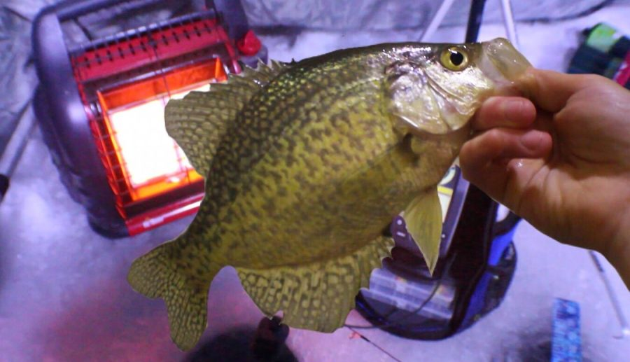 This+crappie+was+caught+during+ice+fishing+2018.
