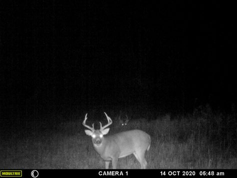 Nice Buck on a Moultrie trail camera.