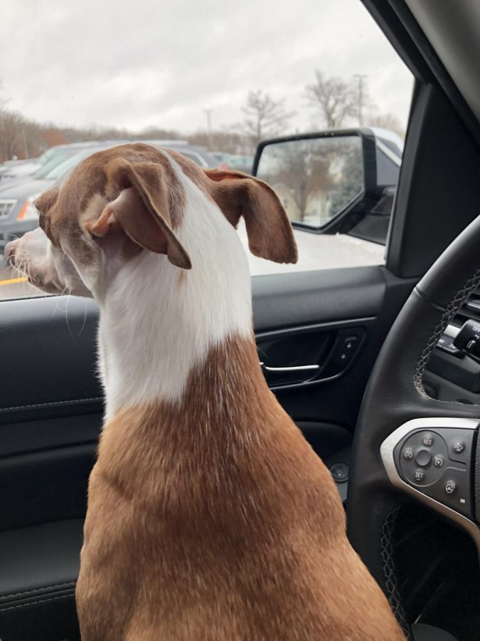 Boomer watches as my mom goes into the store quickly.