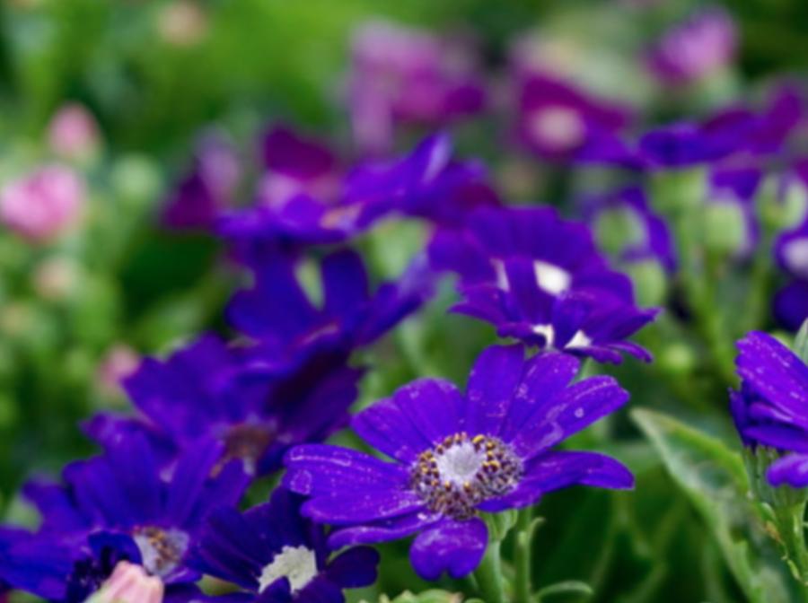 Pretty purple flowers in the sun.